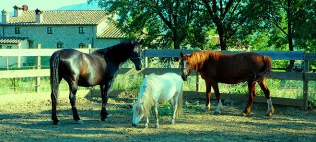 Tuscan farmhouse with horses: horse riding in Tuscany, walking paths in the Tiber Valley (Valtiberina) at Anghiari